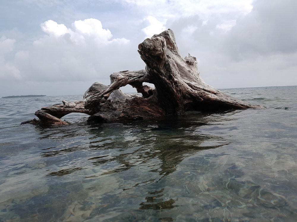 nature-treetrunk-claudiab.jpg