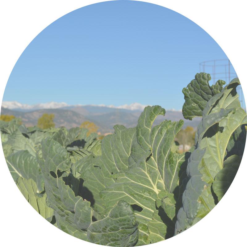 community-garden-web-round.jpg