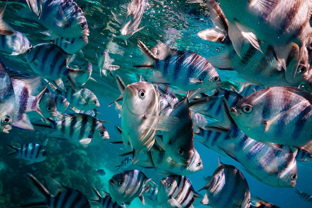 Collard Studios_Underwater and Drone Photography_Social Content-1005.jpg