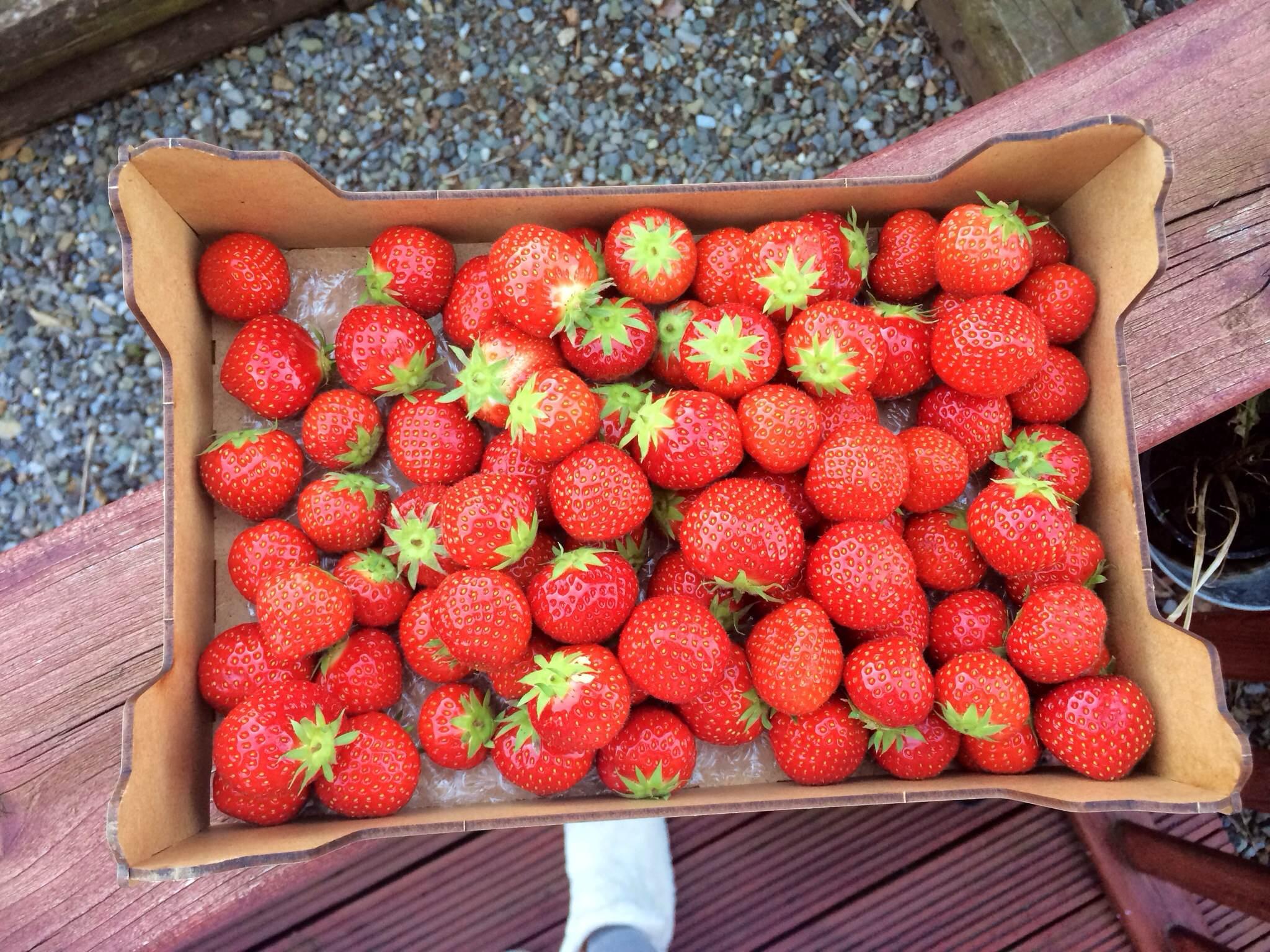 Keelings Summer Strawberries