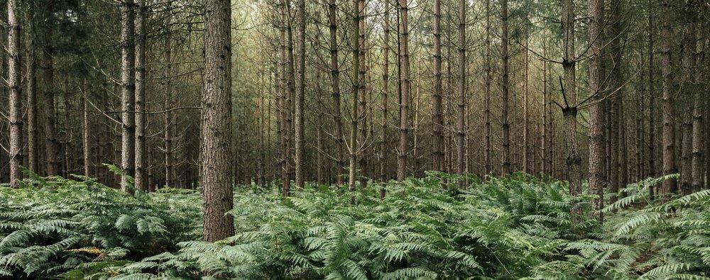 Bagley Wood, Oxford, UK