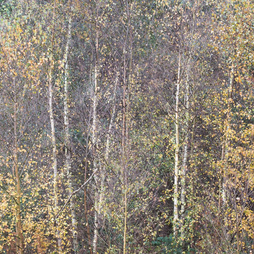 Nature web-19.jpg