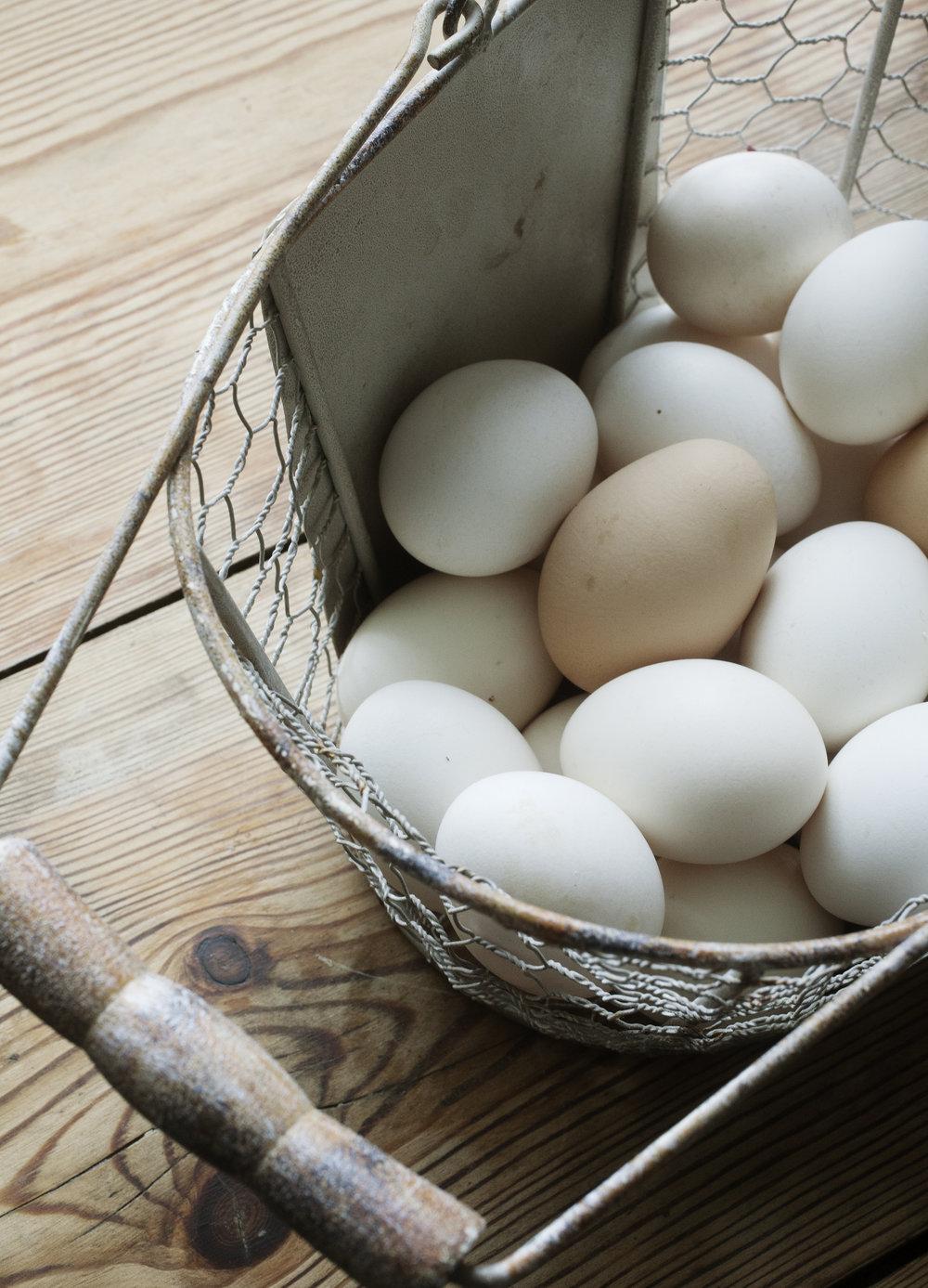 KK småbruk13 egg.jpg