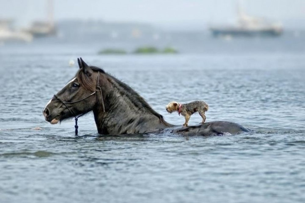 Horse with pup.jpg