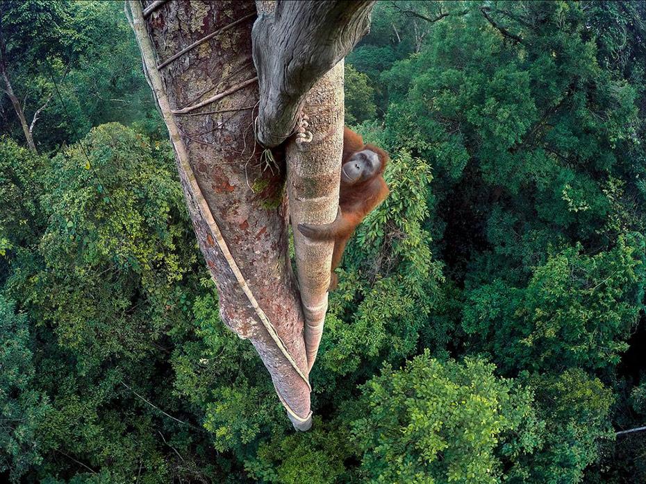 1-wildlife-photographer-of-the-year-winners.jpg