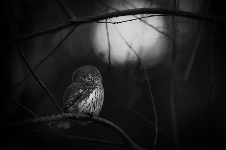 9-wildlife-photographer-of-the-year-winners.jpg