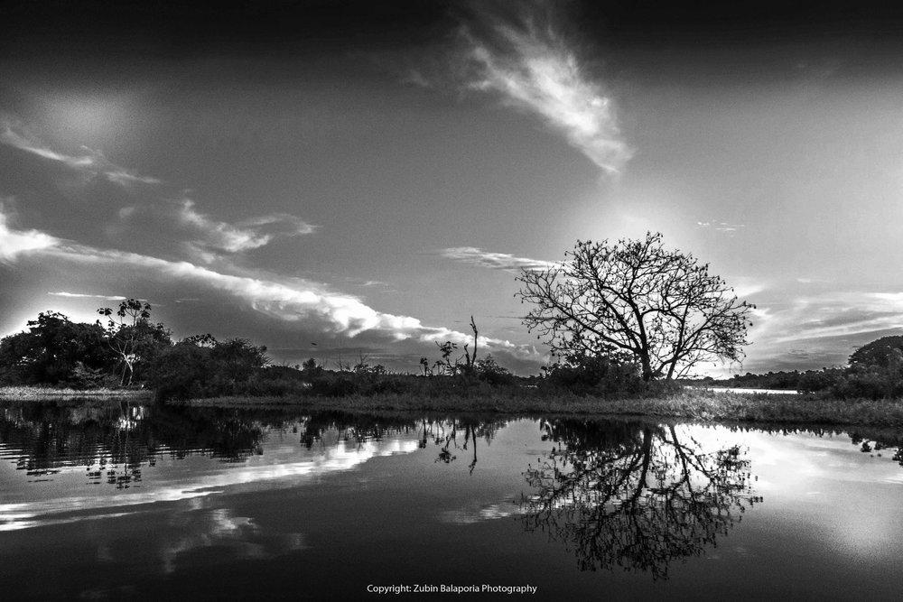 AMAZ Tree Sky Sun & River bw.jpg