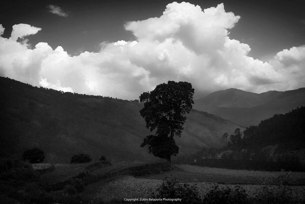 Tree & Cloud