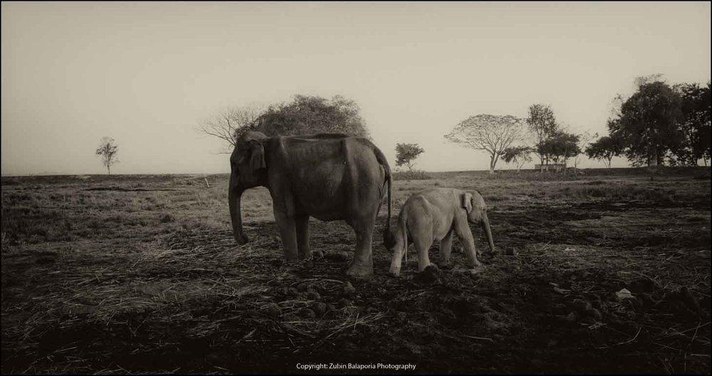 Elephants - We're not talking..