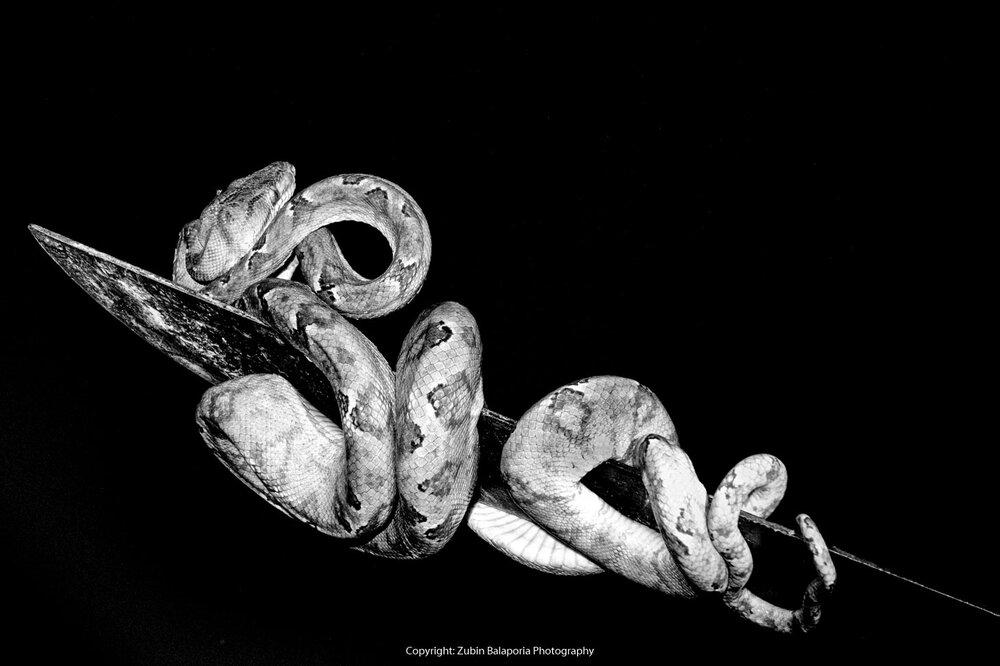 Snake and Machete