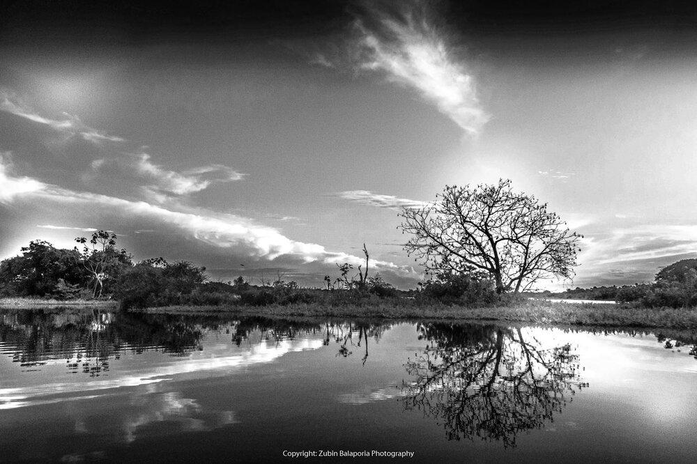 Tree Sky Sun & River