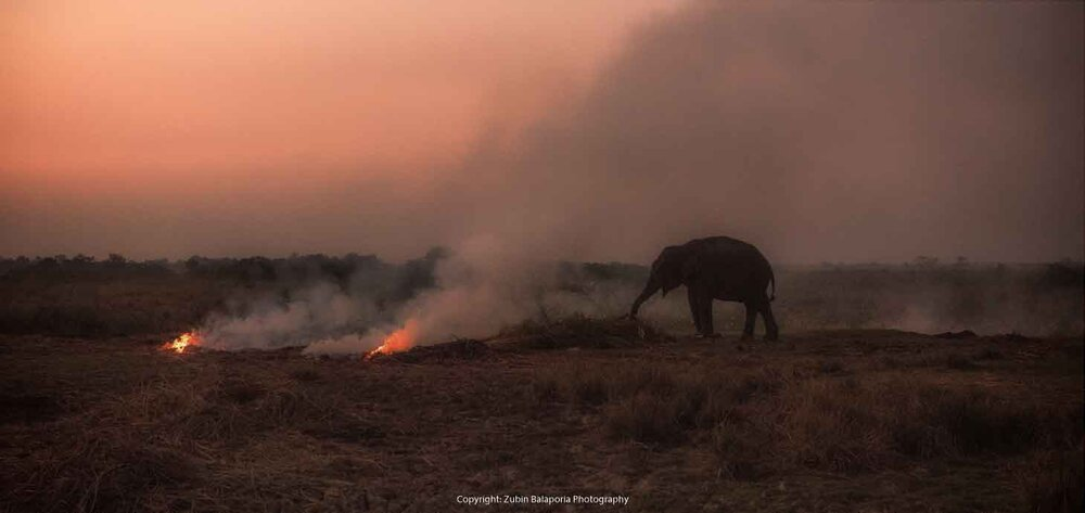 Smoky Elephant 1