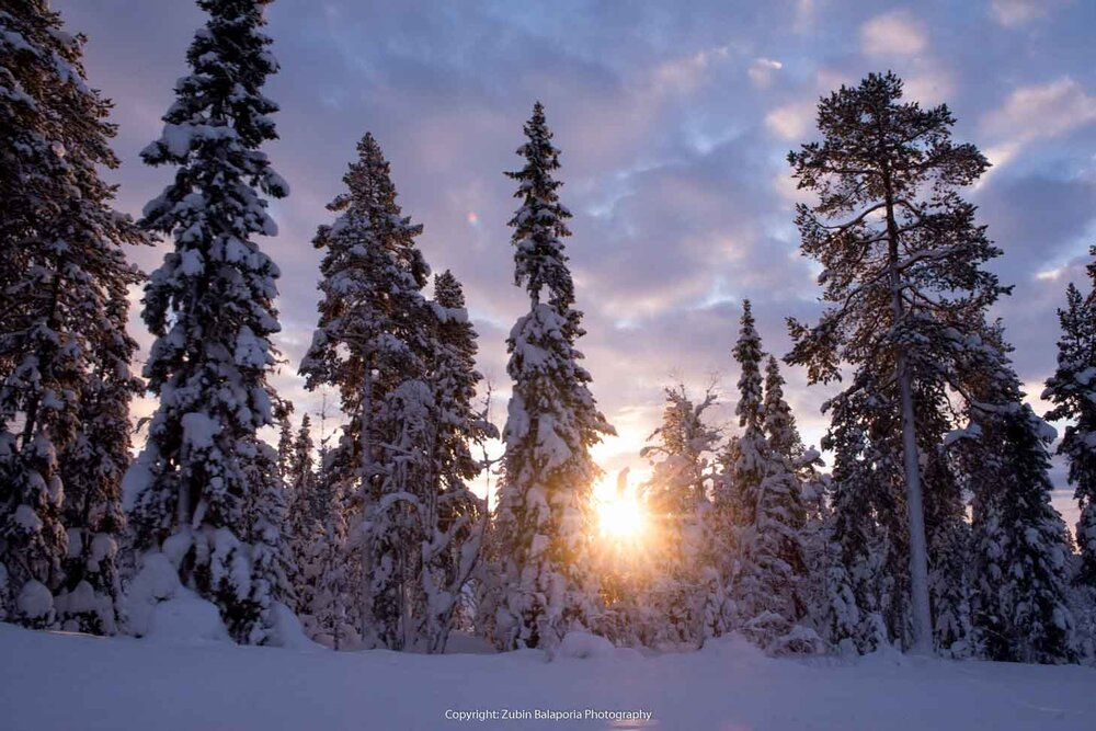 Winter Trees and Sunlight