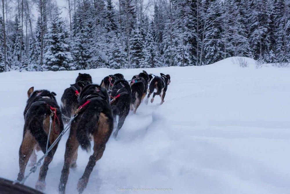 Lapland Husky Sled