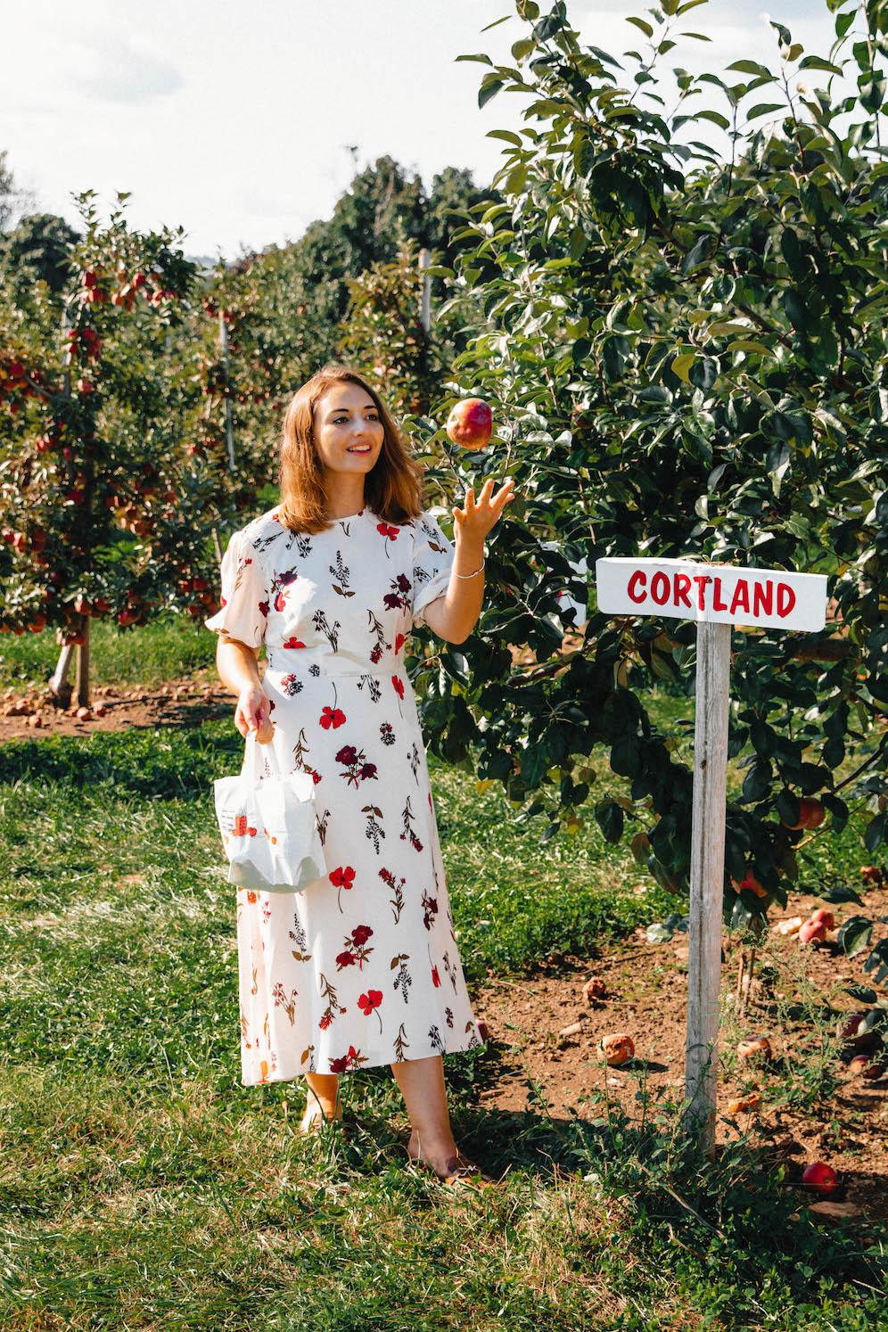 Apple-Picking-in-Fairfield-County-Connecticut-The-Coastal-Confidence-by-Aubrey-Yandow-1635.jpg
