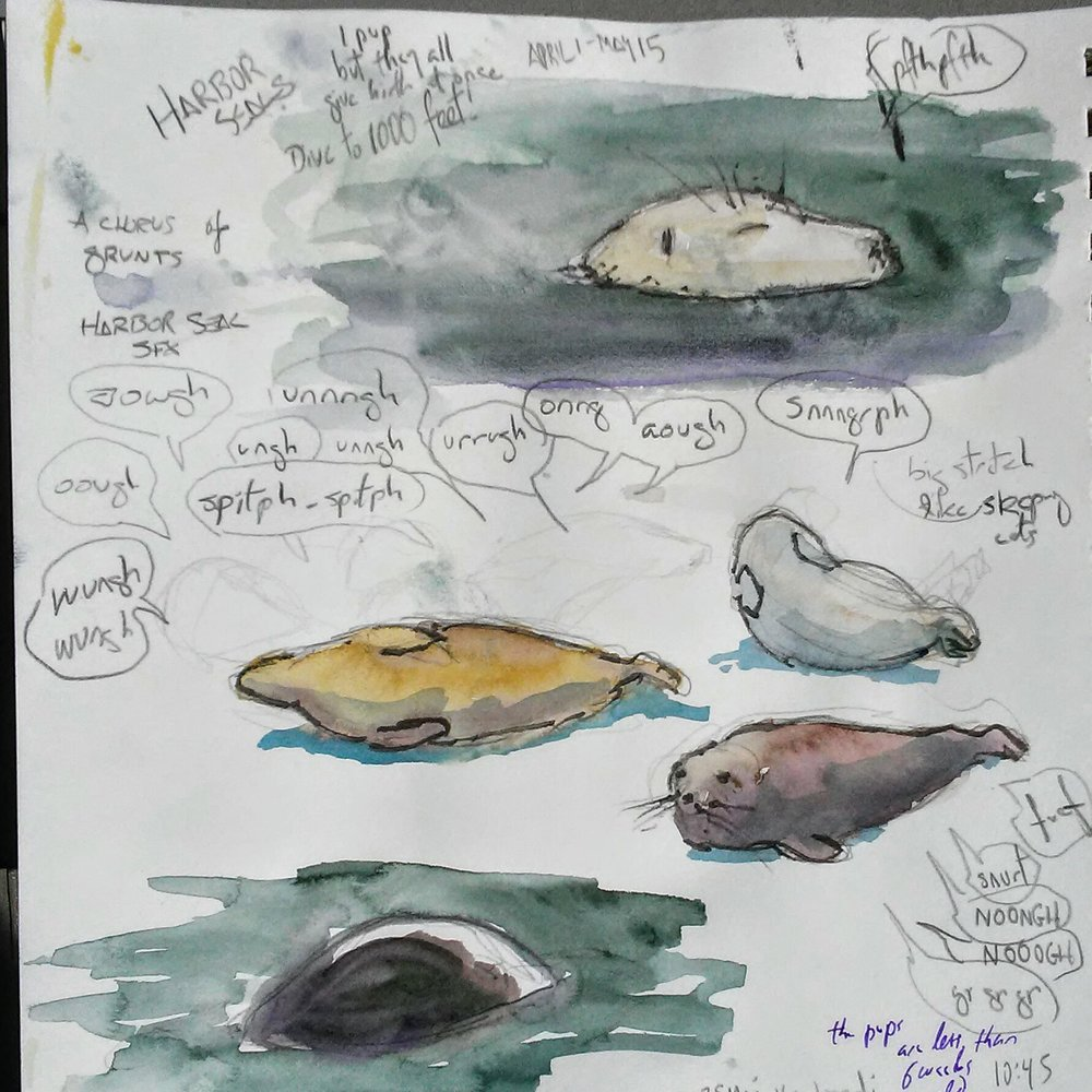 A few of the harbor seals and a sampling of their awesome noises. Art by author.