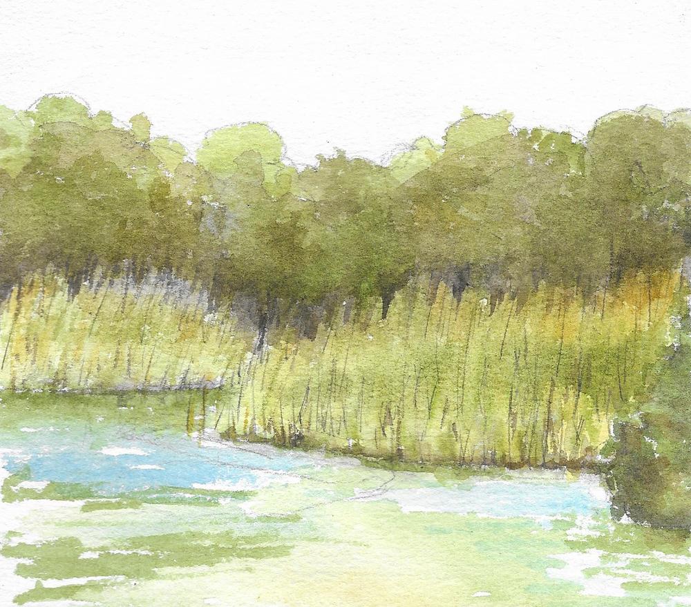 Tule reeds along the lakeside