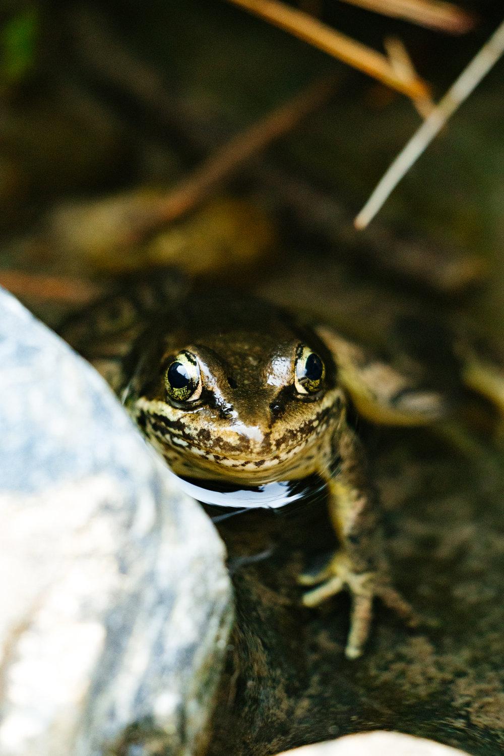 Washington State Wildlife and Conservation Photographer