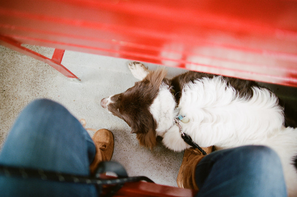 Couple traveling full time on the road with a Newfoundland dog