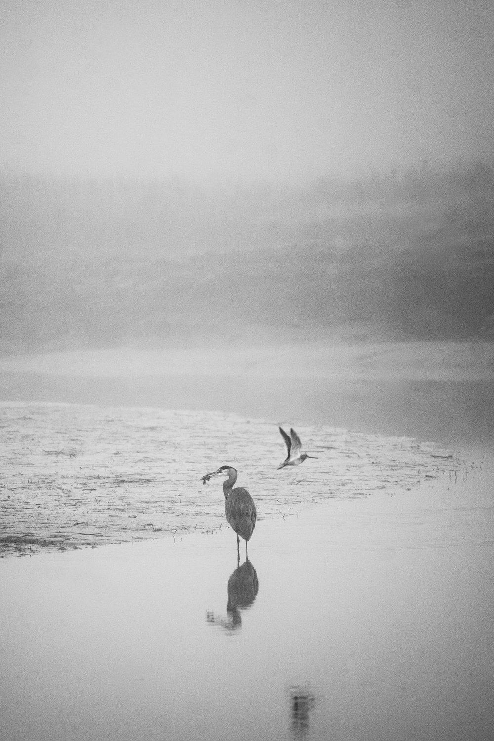 Wildlife Photographer in the Pacific Northwest