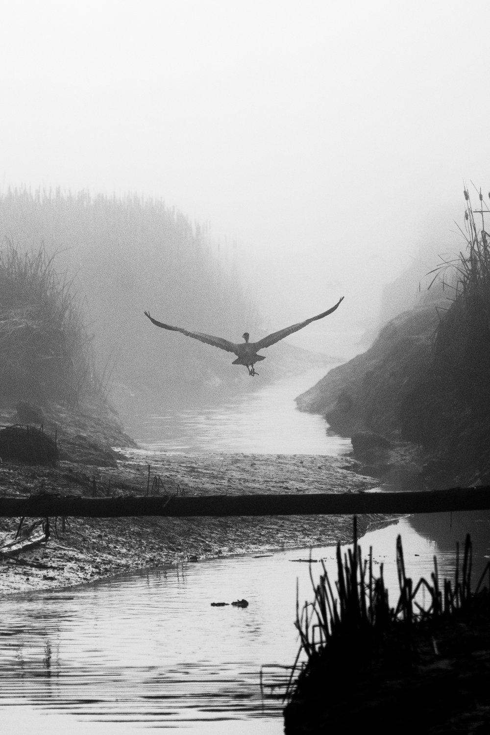 Top Wildlife Photographers in Seattle, Washington