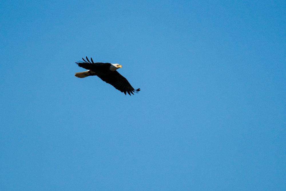 Wildlife Photography in Washington State