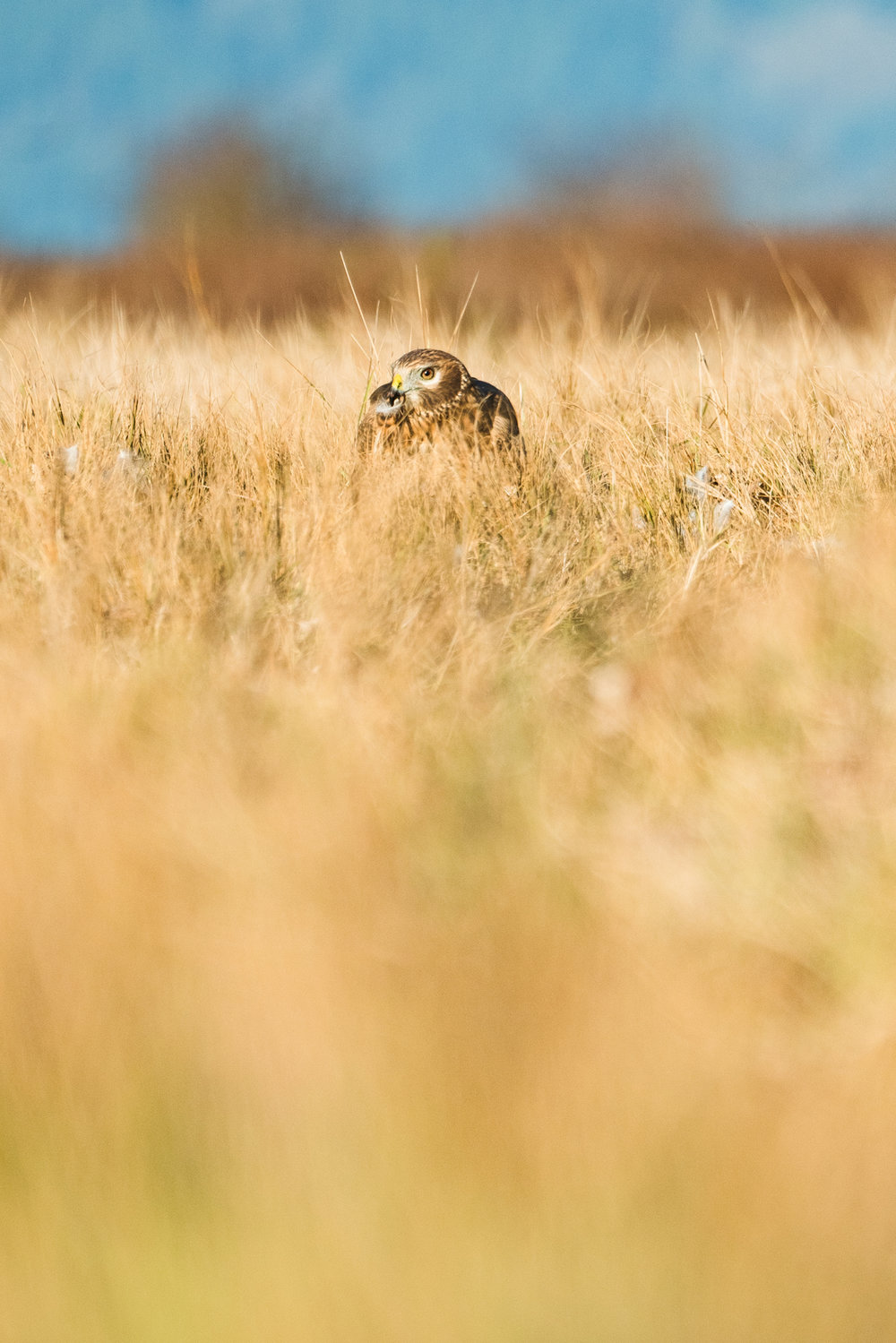 Best Wildlife Photographers in Washington State