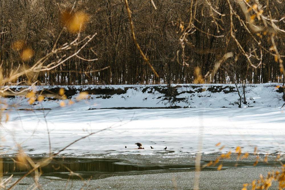 Minnesota Wildlife Photographer