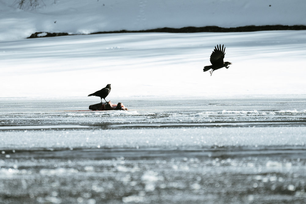 Best bird watching in Minnesota