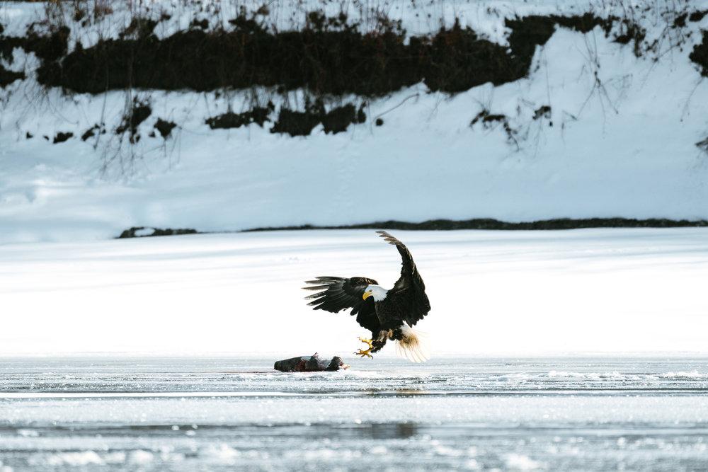 Seattle Wildlife Photographer