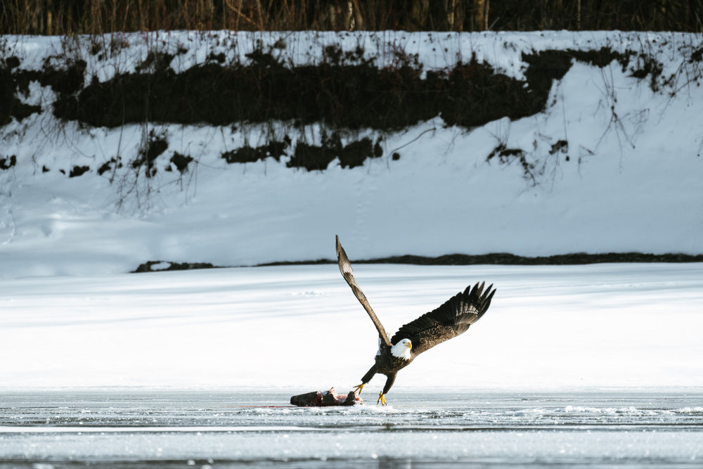 Seattle Conservation Photographer