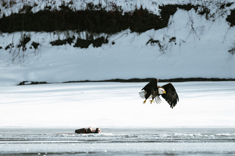 Minnesota Conservation Photographer