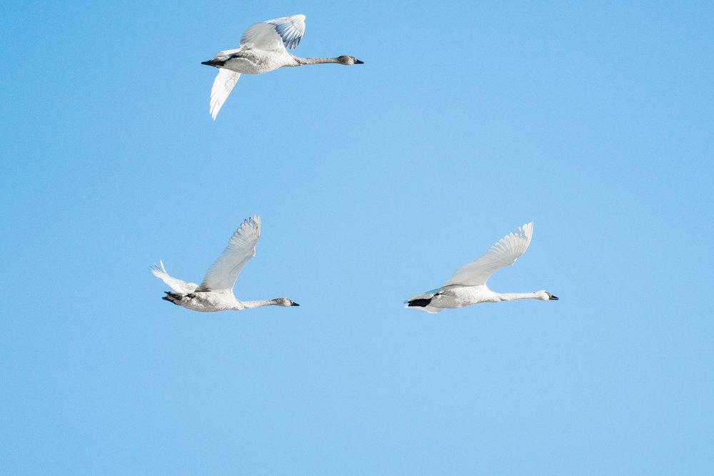 Minnesota Wildlife Photography