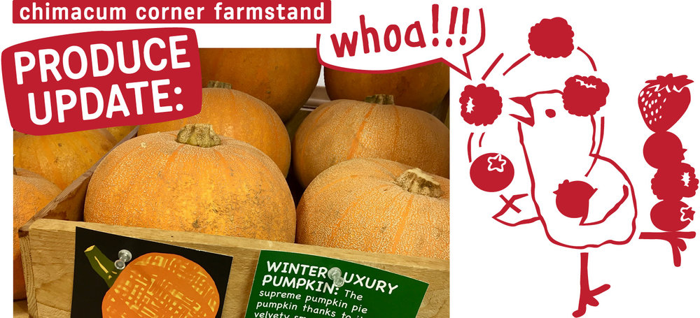 produce-update-cartoon-winter-luxury-pumpkin-chimacum-corner-farmstand.jpg