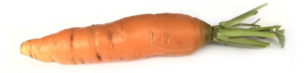 isolated-midori-farm-carrot.jpg