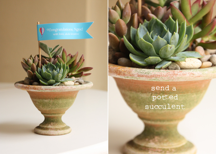 Mini Potted Succulent