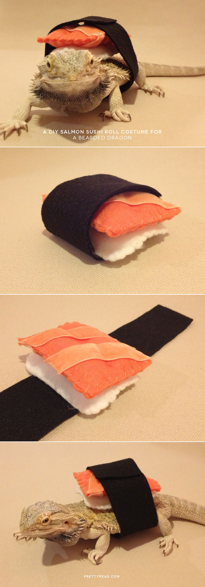 DIY pet sushi roll costume, lizard, bearded dragon