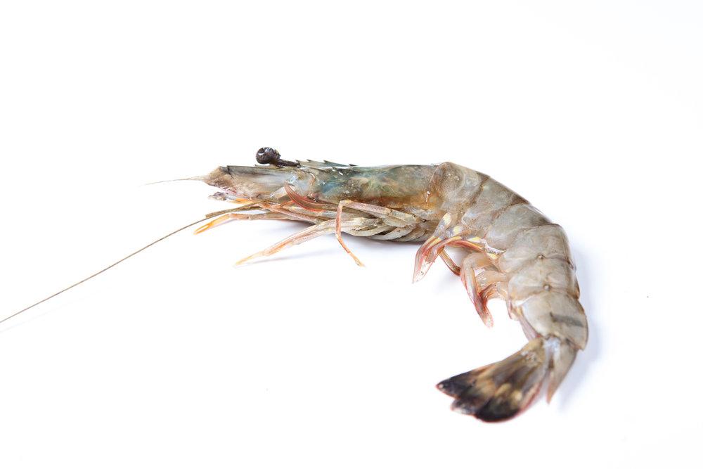 stock-photo-raw-food-close-up-single-shrimp-with-white-background-629574203.jpg
