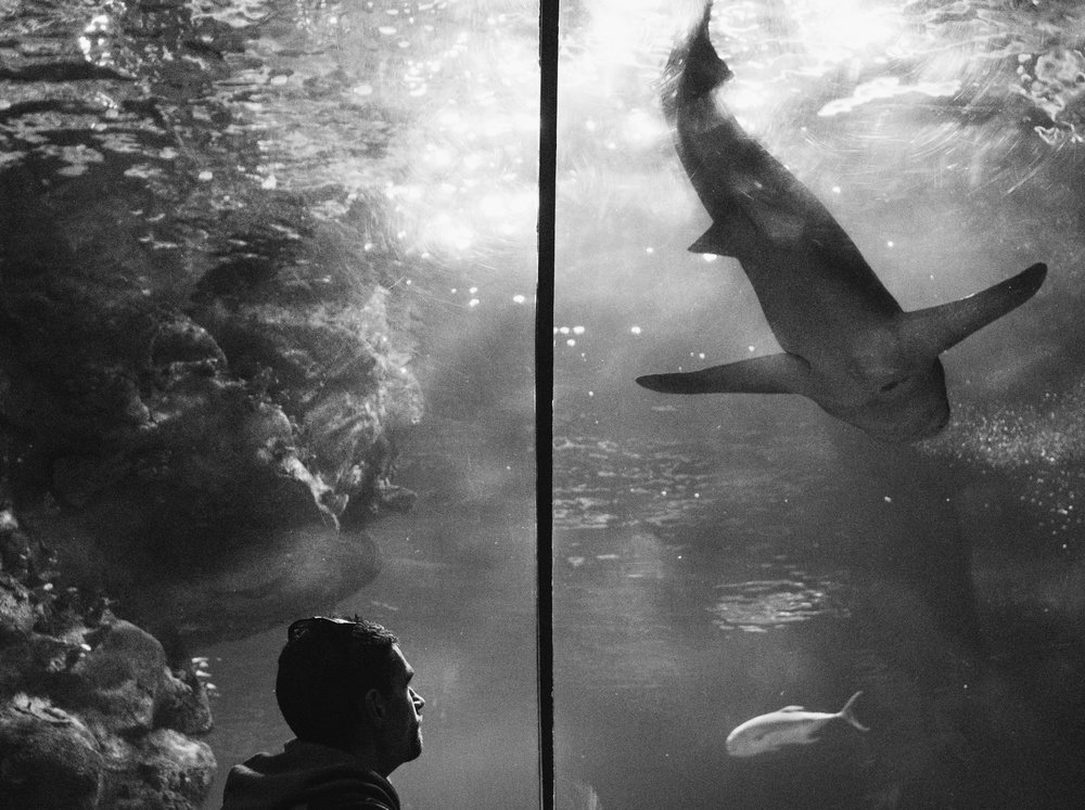 Man Looking at Shark Koren Smith Photography
