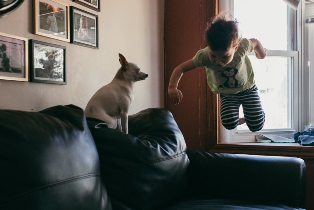 Girl jumping onto the couch while dog watches from the sidelines