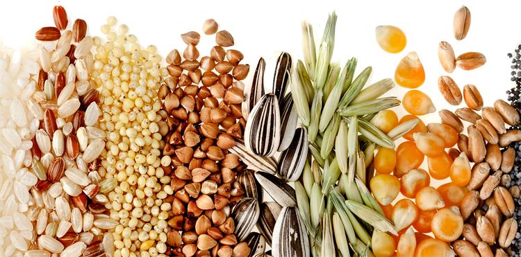 grains-cereals.jpg