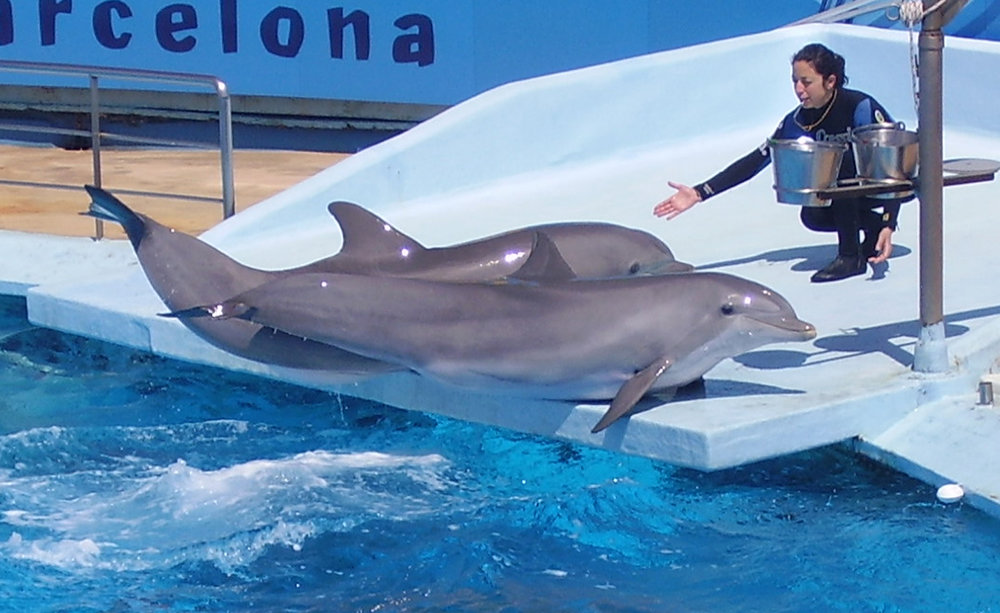 Dolphin_and_trainer_1.jpg