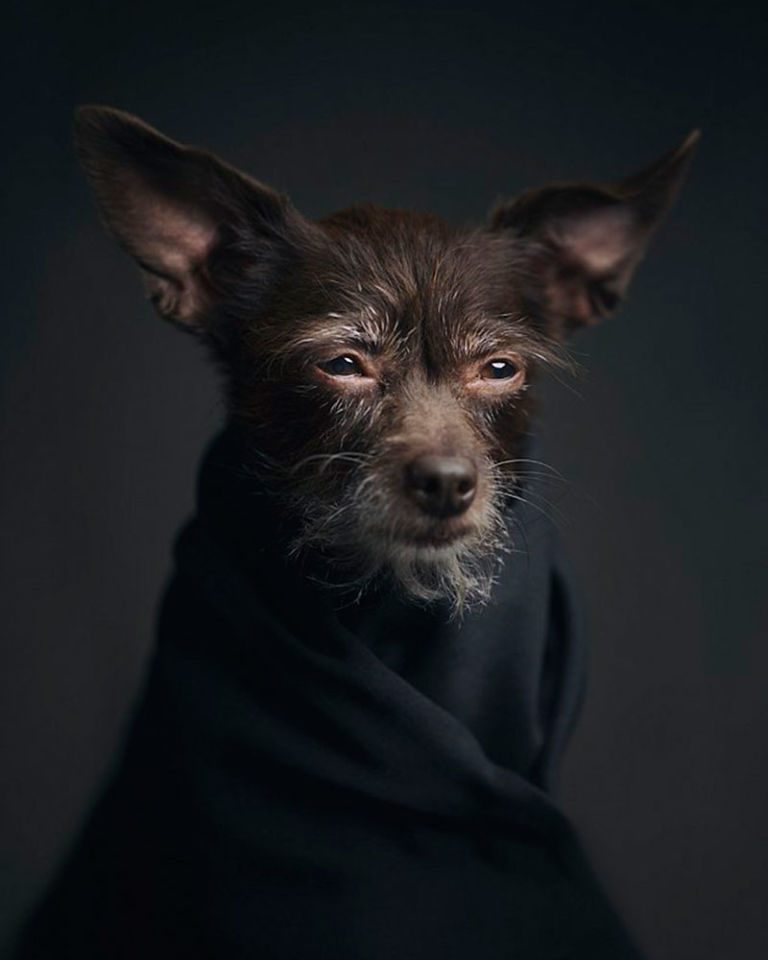 dog-portrait.jpg