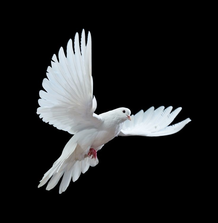 With all the John Woo callbacks I was rather let down by the distinct lack of doves fluttering about.
