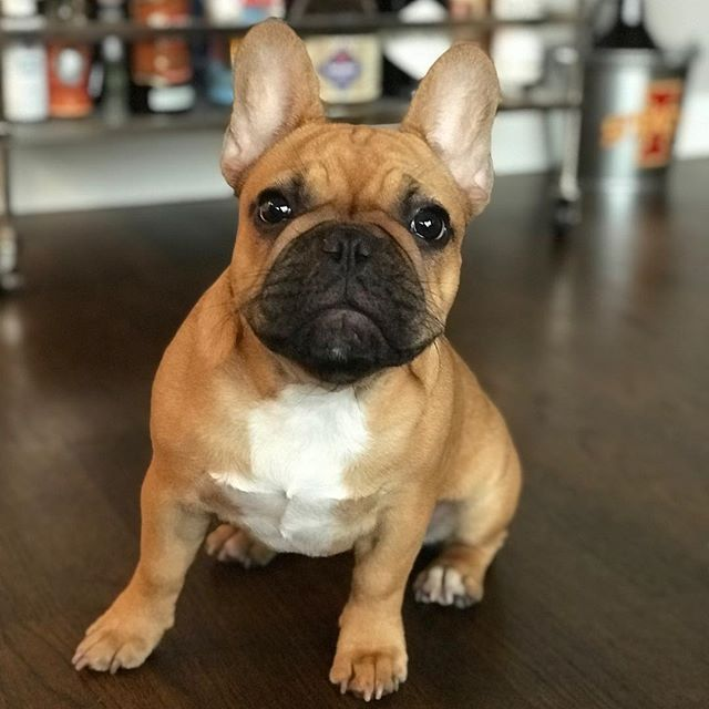 Meet the cutie pie Winnie, the newest addition to the WCP family! #wcpfamily #dogsofchicago #pupsofriverwest #pupsofinstagram #dogsofinstagram #pupsofchicago #doggos #puppers #handsomedog #dogsofchicago #chicagodogs #pupstagram #instapets #pets #dogs #instadogs #petstagram #dogstagram #dogsofinstagram
