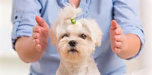 Dogs love Energy Healing