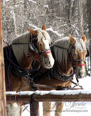 Belgian Sleigh Horses reminiscent of a winter wonderland for Christmas. This nature photography is available to print on a variety of print wall art and home decor items through Fine Art America.