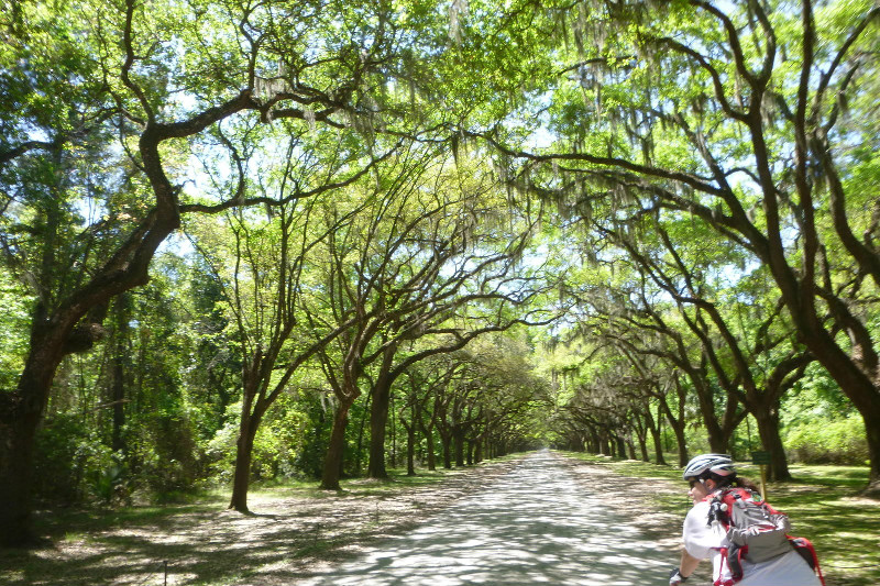 Wormsloe Plantation path, Savannah, GA