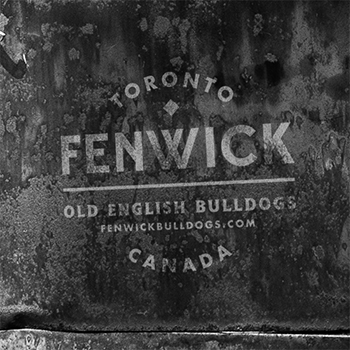 Company Logo, Old English Puppy Breeders in Toronto, ON