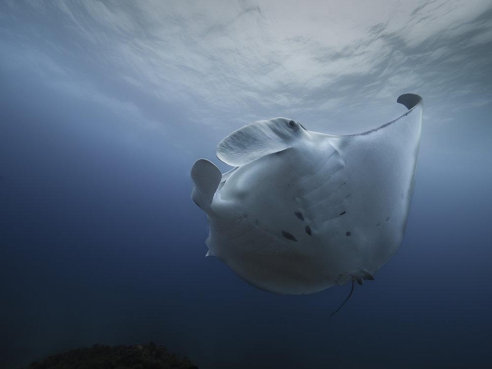 manta ray byron bay